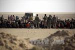 Mỹ tin cuộc chiến giành lại Mosul sẽ thành công