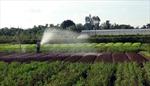 Tạo chuỗi liên kết: Hướng đi cần thiết cho sản xuất rau an toàn