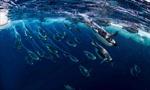Nam Cực sẽ có khu bảo tồn biển lớn nhất thế giới