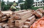 Kỷ luật nhiều chi bộ, đảng viên trong vụ khai thác rừng trái phép
