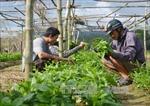 """""""Vùng trũng"""" về cơ giới hóa trong nông nghiệp"""