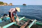 Cần quy hoạch nghề nuôi cá lồng bè trên biển Hòn Nghệ
