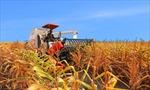 'Rất nhiều tiềm năng nông nghiệp mà không khai thác được'