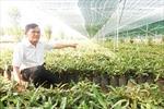 Cần đẩy nhanh tiến độ giao đất trồng cây mắc ca