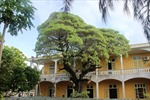 Sắc xanh cây phong ba di sản trên đảo Song Tử Tây