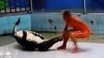 Hãi hùng cá sấu ngoạm tay huấn luyện viên