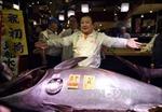 Ông chủ nhà hàng sushi chịu chơi, chi 14 tỷ đồng mua cá ngừ quý hiếm