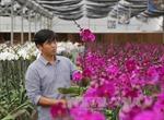 Xây dựng Trung tâm giao dịch hoa quy mô lớn