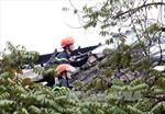 Hà Nội phấn đấu giảm số vụ cháy nghiêm trọng