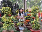 Hơn 100 chợ hoa Tết cho người dân du Xuân