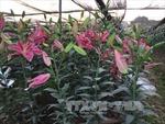 Sôi động thị trường hoa tươi, cây cảnh dịp cuối năm