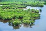 Đất ngập nước giúp giảm nhẹ thiên tai
