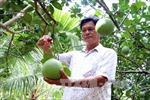 Bến Tre xây dựng 8 chuỗi giá trị sản phẩm nông sản chủ lực