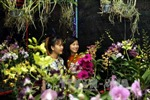 Rực rỡ chợ hoa Xuân Bình Điền