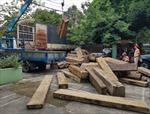 Chở phách gỗ sai kích thước bị CSGT phát hiện