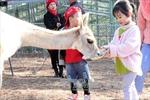 ZooDoo Đà Lạt - 'Sở thú thân thiện' theo phong cách Australia