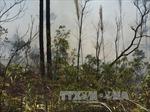 Đang cháy lớn ở rừng thông đặc dụng tại chùa Lôi Âm, Quảng Ninh