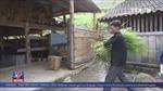 Hiệu quả từ mô hình chăn nuôi, nhốt trâu, bò vỗ béo ở Hà Giang