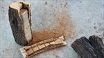 Cảnh sát Mỹ phát hiện lượng lớn cần sa giấu trong thân gỗ
