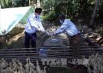 Nhiều địa phương phát hiện ổ dịch cúm gia cầm