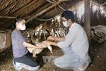 Đồng Nai tiêm phòng bổ sung cho hơn 1 triệu con gia cầm