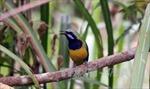 Trên 510 tỷ đồng bảo tồn đa dạng sinh học tại Lâm Đồng