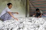 Cơ hội phát triển kinh tế cho người nghèo vùng cao