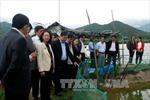Phú Yên cần tạo điều kiện để nông dân tiếp cận nguồn vốn hỗ trợ