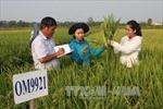 Có nên thu phí bản quyền giống lúa?