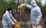 Bệnh nhân nhiễm cúm gia cầm H7N9 có tỷ lệ tử vong đến 50%