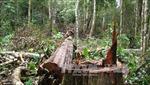Phát hiện vụ phá rừng phòng hộ tại Đăk Hà, Kon Tum