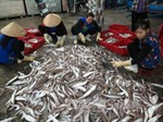 Bình Thuận tăng cường kiểm tra, ngăn chặn việc dùng chất nổ đánh bắt hải sản