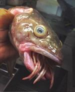 Ngư dân Nga phát hiện hàng loạt 'quái vật biển' ghê rợn