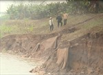 Khắc phục sự cố sạt lở kè Lam Sơn trên đê tả sông Hồng