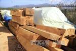 Bị bắt giữ, lái xe chở gỗ lậu đổ toàn bộ tang vật xuống đường
