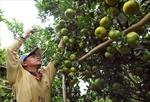 'Đầu ra' bền vững cho nông sản ĐBSCL