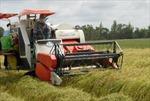 Thay đổi tư duy sản xuất lúa gạo