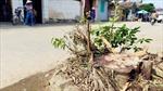 Vận động người dân tự chặt cây tạp tại Hạ Bằng