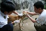 Nghệ An: Xã có 53 người bị chó cắn đang giám sát chặt bệnh dại