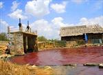 Hồ chứa nước khu chế biến hải sản Tân Hải chuyển màu đỏ, chảy tràn ra sông