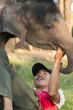 Hành trình tìm sữa mẹ cho chú voi sơ sinh mồ côi