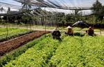 'Cởi trói' cho ngành nông nghiệp vùng ĐBSCL