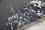 Cá chết trên sông Vĩnh Trà là do ô nhiễm nguồn nước