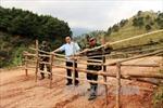 Lạng Sơn xử lý trên 40 vụ vận chuyển gia cầm nhập lậu trong tháng 3