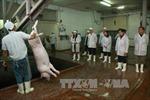 Vẫn còn lỗ hổng an toàn trong chuỗi cung cấp thực phẩm