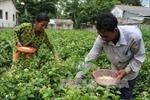 Trà Vinh: Gần 2.500 tỷ đồng hỗ trợ đồng bào Khmer phát triển sản xuất