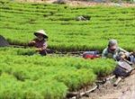 Gia Lai sẽ thu hồi 7.000 ha đất rừng bị lấn chiếm để trồng lại rừng