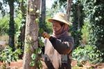 Tây Nguyên trở thành vùng sản xuất nông sản hàng hóa lớn của cả nước