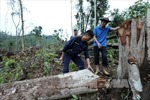 Điện Biên tập trung giải quyết tình trạng phá rừng và di cư tự do ở Mường Nhé