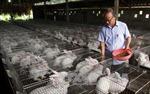 Làm nông nghiệp công nghệ cao, được vay vốn với lãi suất thấp